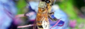 Honey bee wearable