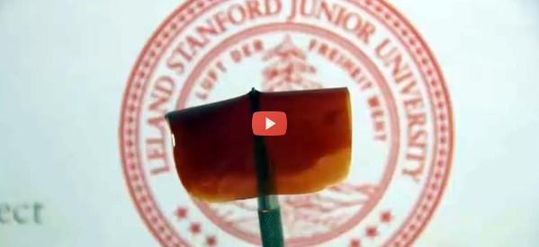 Stanford polymer