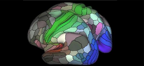 Brain Regions 600x277