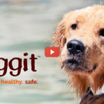 Pet Health Wearable Ticks Multiple Boxes [video]