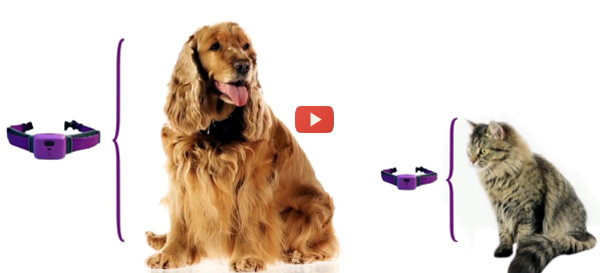 Wearables Connect Pets to Veterinary Practices [video]