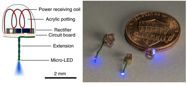 Wireless Power Activates LED Implants in Mice