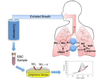 Graphene Sensor Detects Lung Inflammation