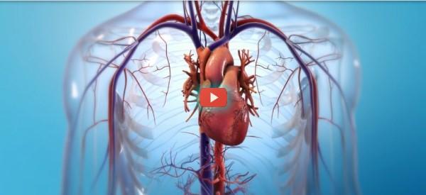 Bioprintable Heart Progress Reported [video]
